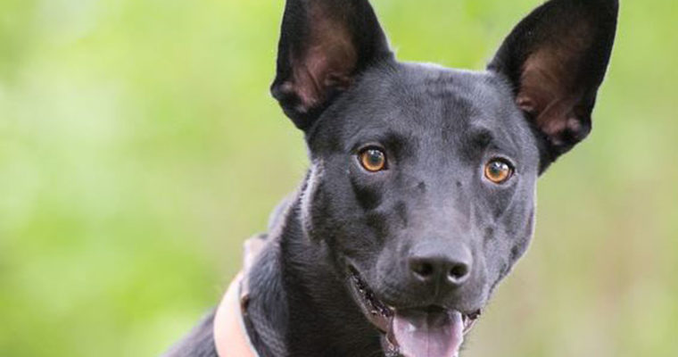 Pet of the Month: Dashing Denny needs a home!