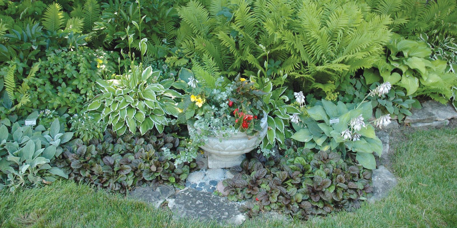 Shade gardening beyond Hostas