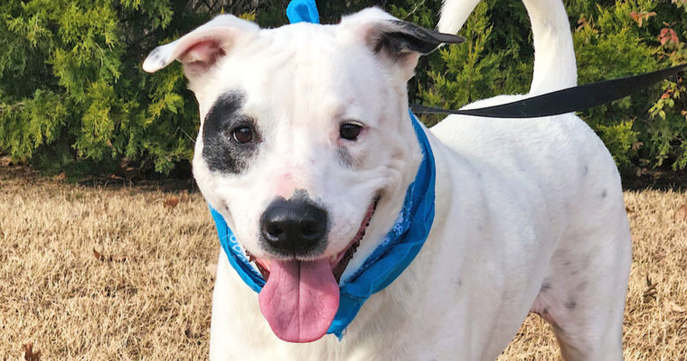 Give  Gatsby a home