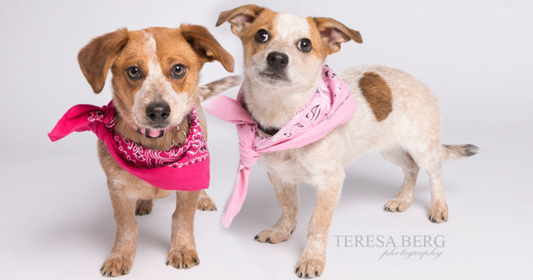 Take home Tutu & Tilly