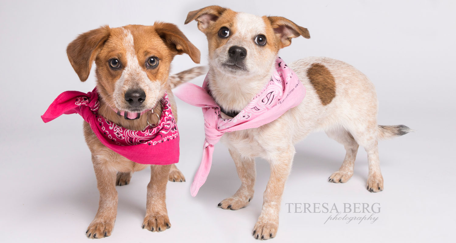 Take home Tutu & Tilly