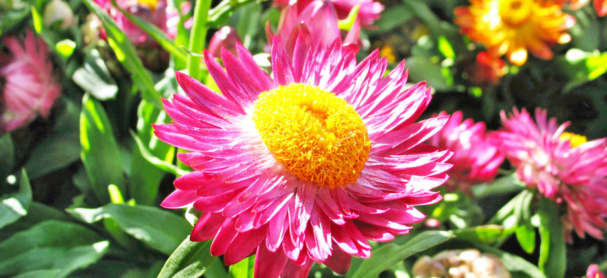 Add color to your winter garden