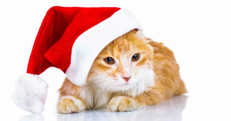Enjoy a pet-friendly holiday