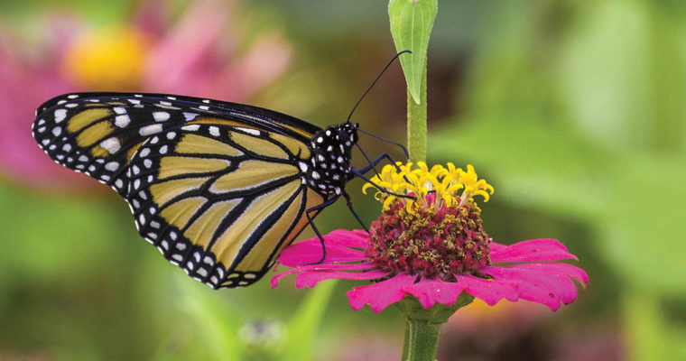 Attracting pollinators to your garden
