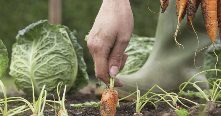 For the love of fall gardening