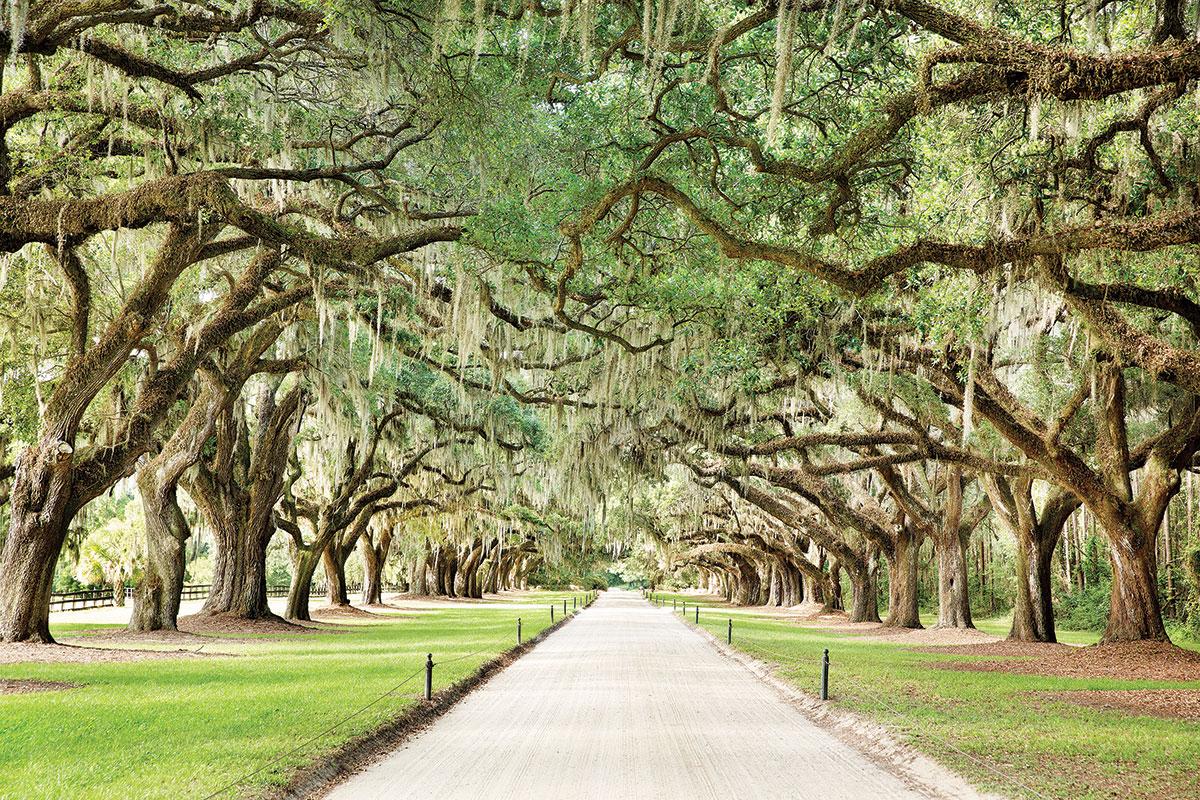 Charming Charleston
