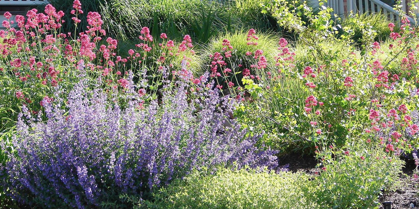 Landscape with drought-tolerant plants