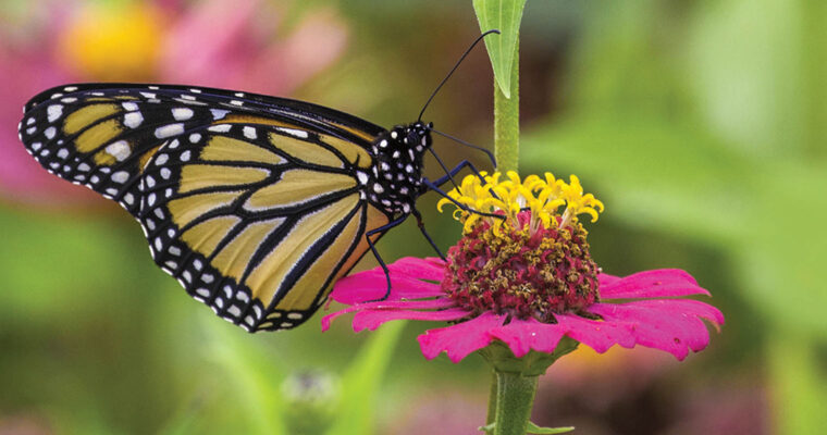 Pollinators are essential for gardens