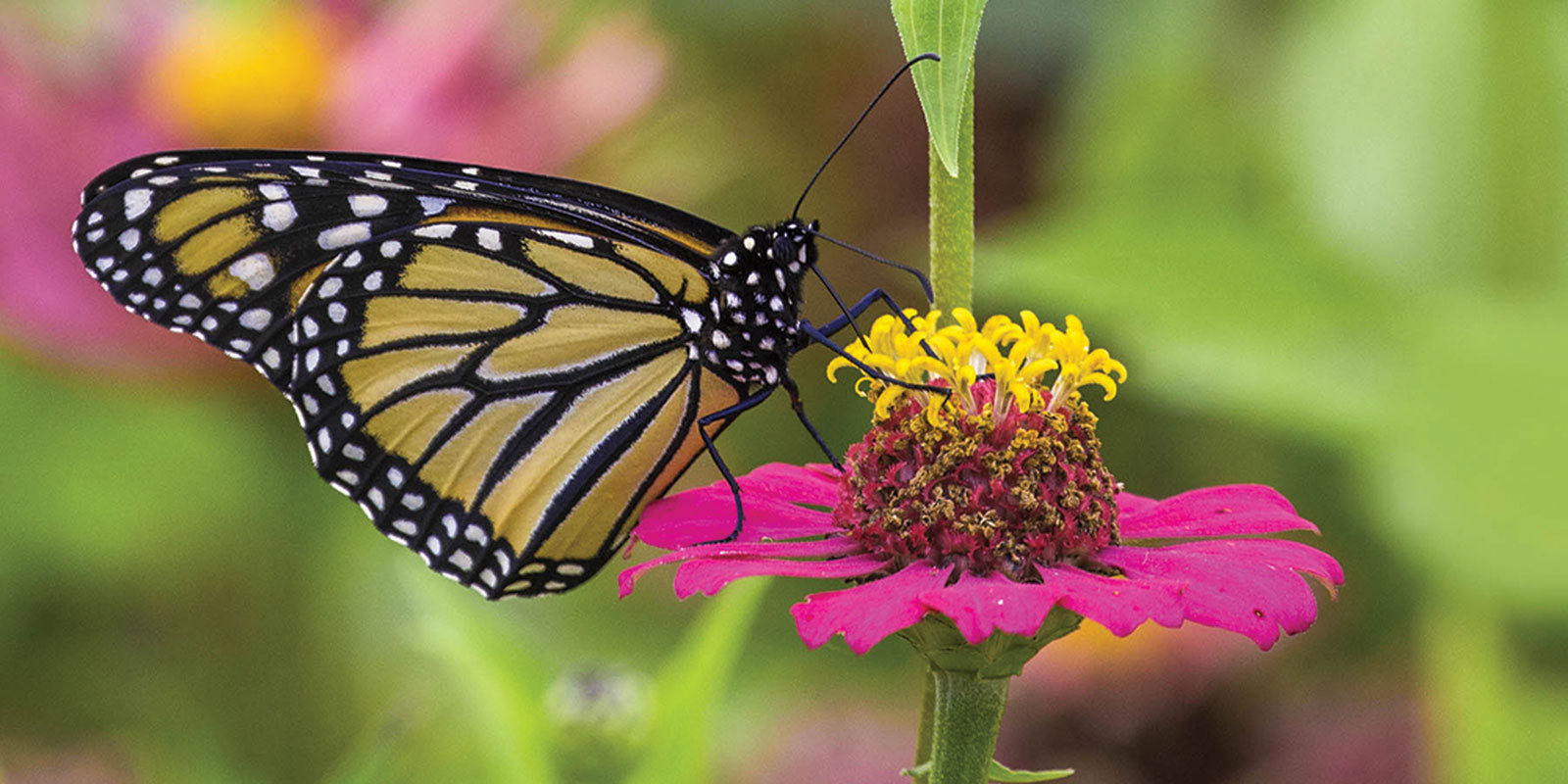 Pollinators are essential for gardens